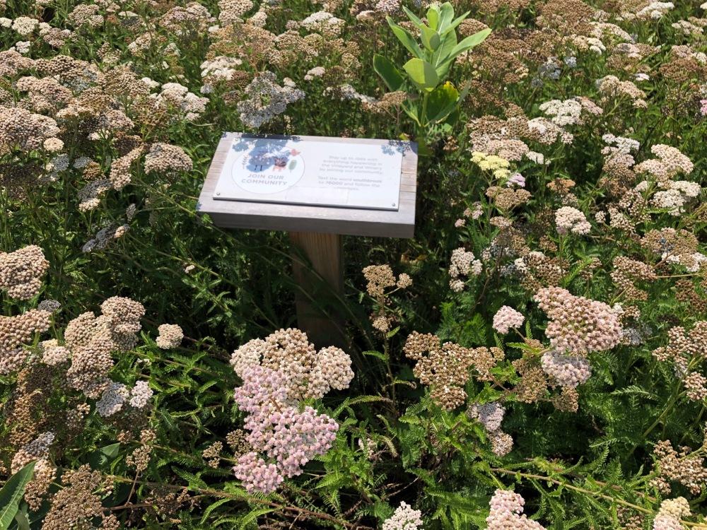 Yarrow wildflowers Southbrook Vineyards amustreadblog