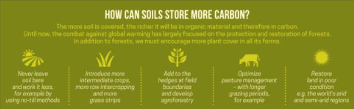soil as carbon sink