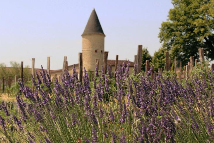 lavender guiraud Insta