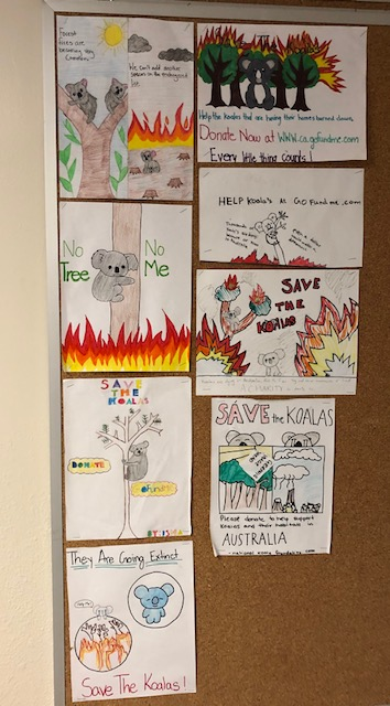 children's pictures of australian fires and koalas at risk