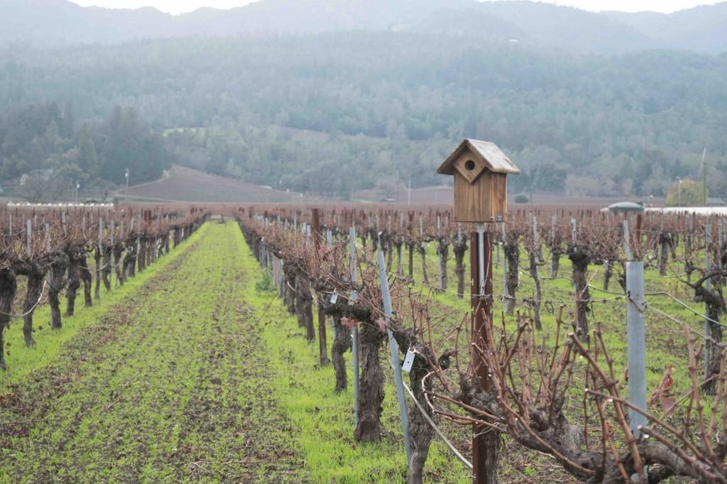 Vineyard framed against mountains