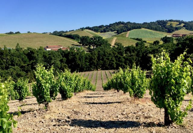 Vines in vineyard and view across hills